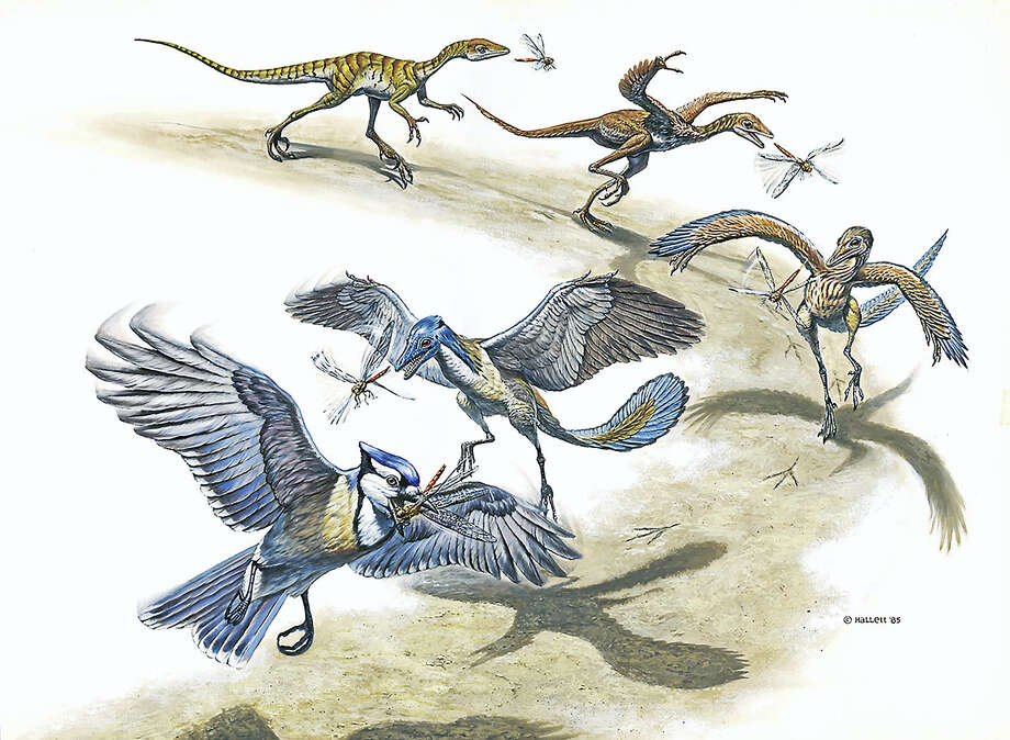 Stitched panorama shows evolution of dinosaur into bird by Mark Hallett. Photo: Photo Courtesy Of Peabody Museum