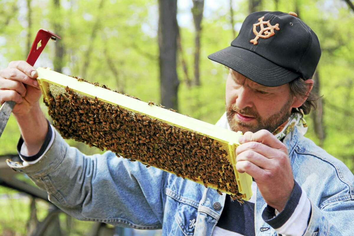 Tim Dutcher, an environmental educator at Common Ground High School, inspects part of a bee hive at West Rock Nature Center.