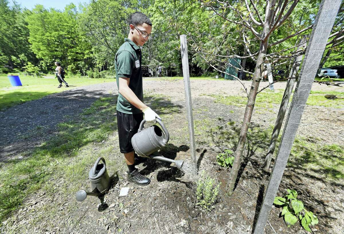 (Arnold Gold/Hearst Connecticut Media) Common Ground High School senior Thomas Melendez, 18, waters new plants before the GRO1000 dedication ceremony for Cherry Ann Park in New Haven on 6/10/2017. The Scotts Miracle-Gro Foundation donated $40,000 for the park.