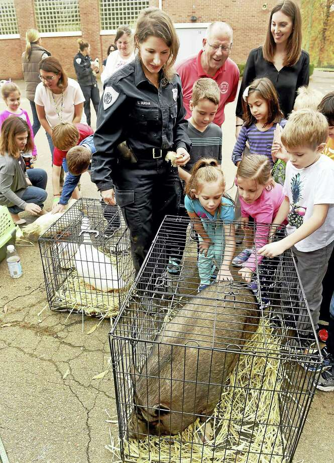Branford Animal Control Officer Laura Burban with Mary T. Murphy School second-graders as they pet a Vietnamese pot-bellied pig during a social studies lesson at the school last month. Burban and her staff, along with local and state officials, joined the students to emphasize responsible animal care. Photo: Peter Hvizdak — New Haven Register   / ?2016 Peter Hvizdak