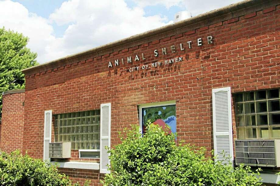 The New Haven Animal Shelter Photo: Esteban L. Hernandez  — New Haven Register