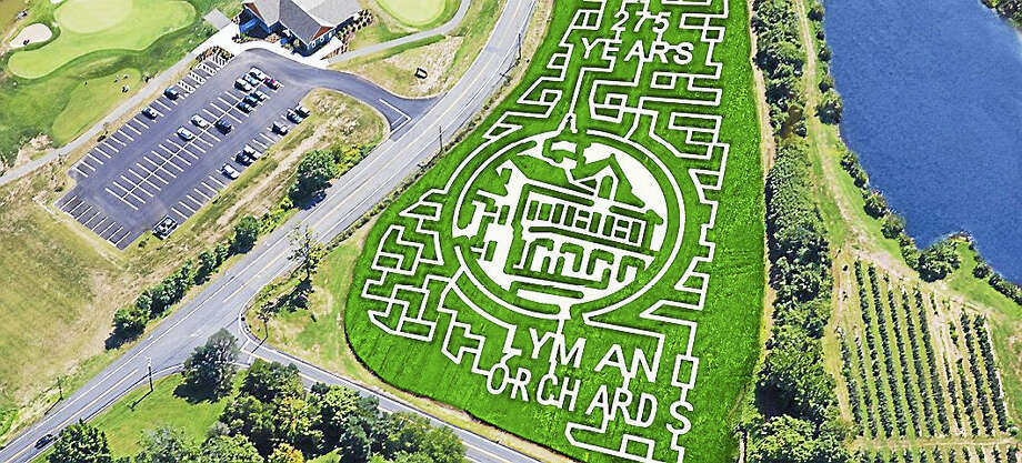 The corn maze at Lyman Orchards. Photo: Photo Courtesy Of Lyman Orchards