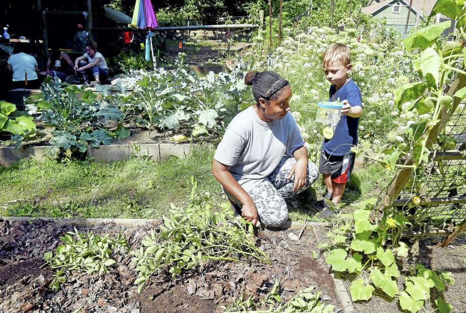 Stanley Kamykowski (far right), 5, shows off a bumble bee to his counselor, Lanissa Gardner, in the vegetable garden during Choice Time at summer camp at Common Ground High School in New Haven. Photo: Arnold Gold-New Haven Register