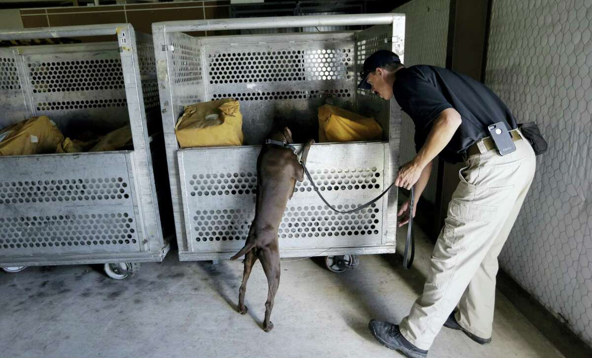 Transportation Safety Administration dog trainer Ford Rinewalt works with Sylvia, a bomb-sniffing dog, in a makeshift warehouse during a drill at Lackland Air Force Base in San Antonio.