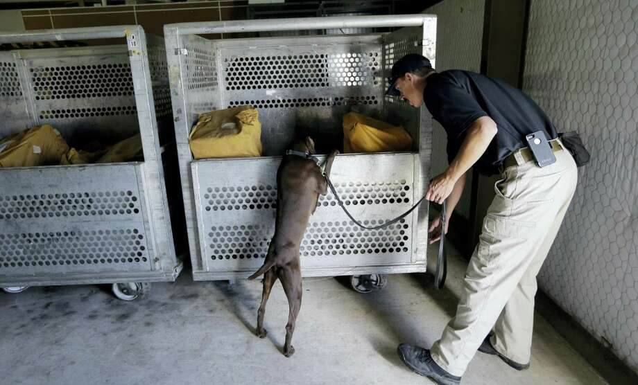 Transportation Safety Administration dog trainer Ford Rinewalt works with Sylvia, a bomb-sniffing dog, in a makeshift warehouse during a drill at Lackland Air Force Base in San Antonio. Photo: Eric Gay — The Associated Press   / AP