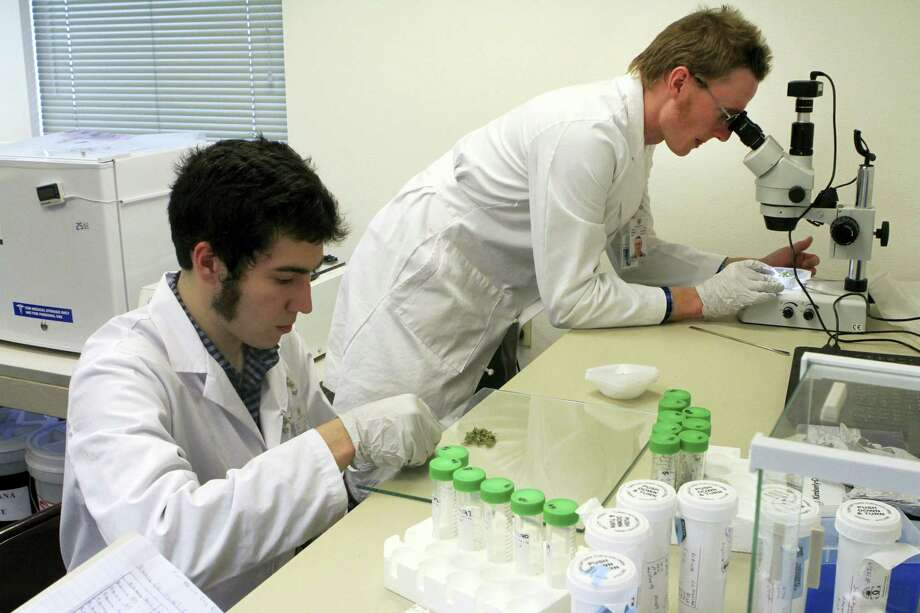 Connor Hellings, left and science director John Rudd, right, work on marijuana samples at CannTest, the first commercial marijuana testing laboratory to open in Alaska on Oct. 24, 2016 in Anchorage, Alaska. Alaskans in November 2014 voted to legalize recreational marijuana and supporting businesses are opening as local and state regulations are approved. Photo: AP Photo/Dan Joling   / Copyright 2016 The Associated Press. All rights reserved.