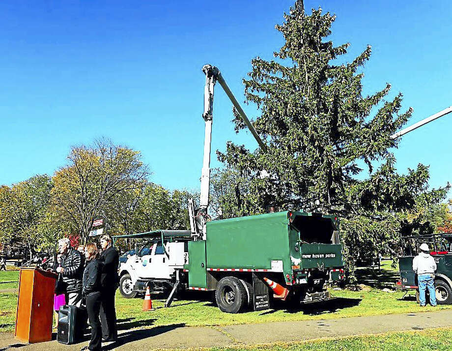 "Andrew Wolf, City of New Haven Director of Arts, Culture and Tourism speaks Monday during the ""Christmas on Halloween"" celebration on the Lower New Haven Green as city officials, joined by sponsors and representatives of community groups welcomed ""the just-harvested, soon-to-be-decorated huge holiday tree,"" 60-foot Norway Spruce. Photo: Peter Hvizdak — New Haven Register"