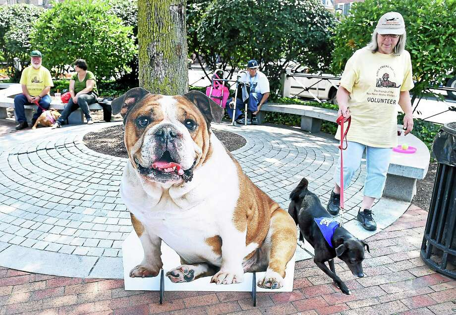 Anna Schildroth of the Friends of the New Haven Animal Shelter walks Melanie, a lab/spitz mix, past a cutout of Handsome Dan during the Paws on Broadway event on the Broadway Island in New Haven in 2014. Photo: Arnold Gold — New Haven Register File Photo