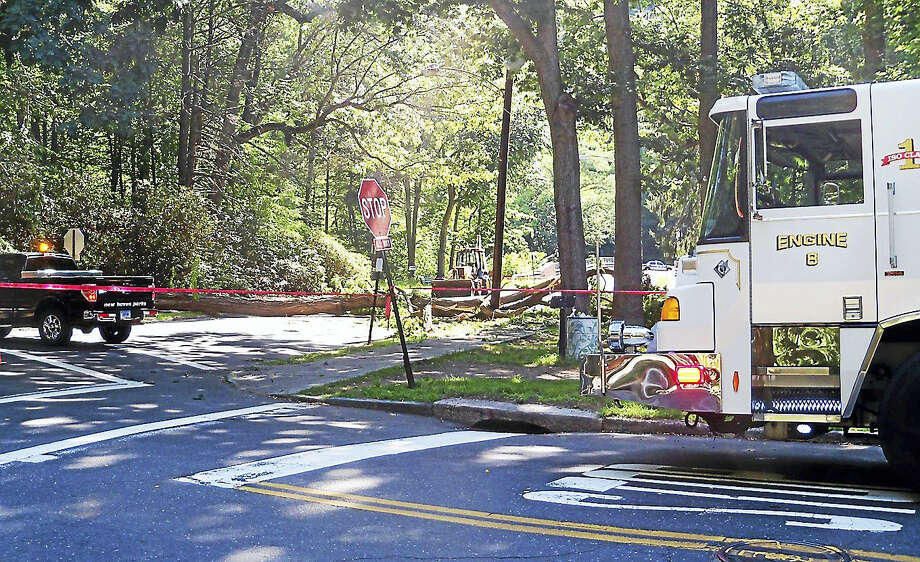 East Rock Road was shut down east of Livingston Street in New Haven late Thursday morning after a large tree came crashing down on power lines, a transformer and the road. Photo: Wes Duplantier — The New Haven Register