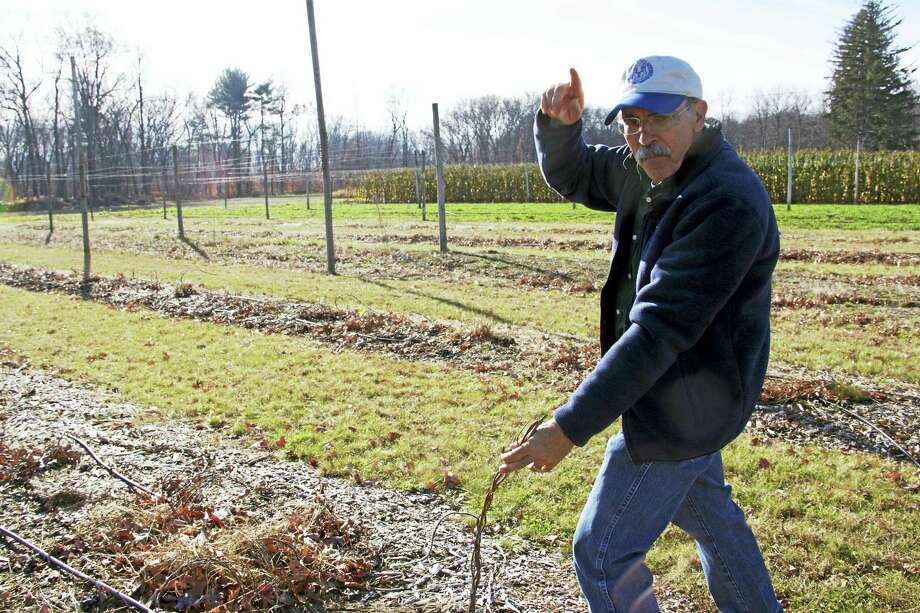 James Lamondia, a chief scientist at the CAES, talks about how hop plants grow vertically in the summer time. Now, due to colder temperatures, the plants are dormant. New vines will begin to sprout in the spring. Photo: Anna Bisaro — New Haven Register