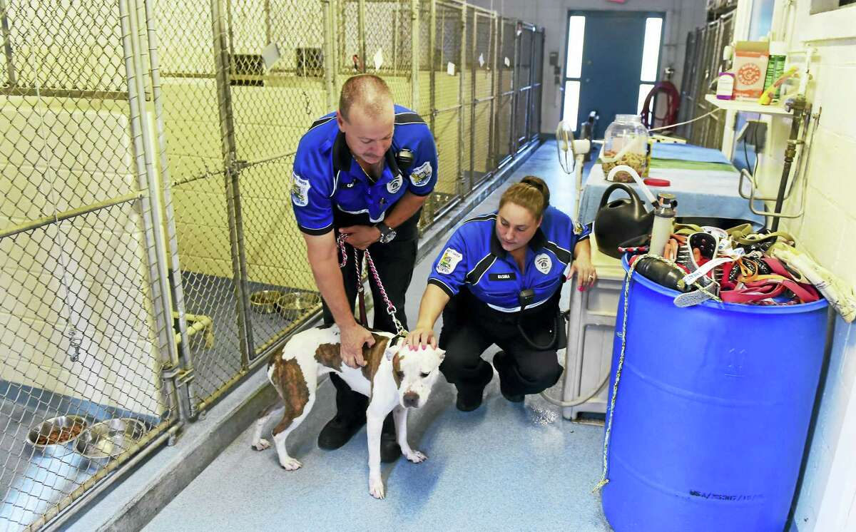 """North Haven Animal Control Officer Dave Carney, left, and Assistant Animal Control Officer Chrystal Rashba, are seen with a well-behaved 1½-year-old female pit/boxer mix Friday who they describe as sweet, gentle, loving and can understand some commands. """"Somebody obviously put some time in her. She will follow you around wherever you go,"""" said Carney. The dog is available for adoption at the North Haven Animal Shelter on Universal Drive in North Haven."""