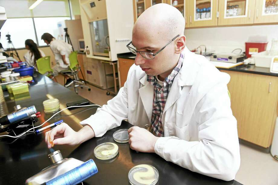 (Arnold Gold-New Haven Register)  Senior biology student Bryan Pasqualucci isolates colonies of E Coli in a lab at Southern Connecticut State University's  Academic Science and Laboratory Building on 8/16/2016. Photo: Journal Register Co.