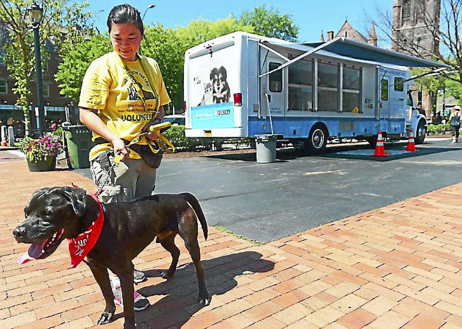 Deb Wan, a volunteer with the Friends of the New Haven Animal Shelter, takes a Black Labrador Retriever mix, Comet, for a walk during the organization's pet adoption event Sunday. Photo: Peter Hvizdak — New Haven Register