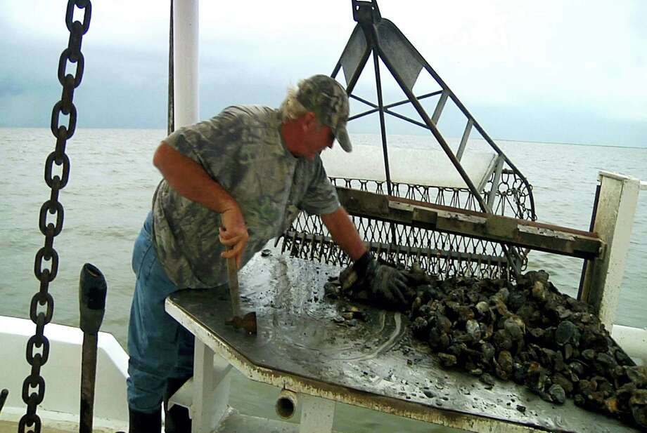 Deckhand John Hoffmann sorts mature oysters from new larvae in Lake of Second Trees in St. Bernard Parish, La. Photo: AP Photo/Stacey Plaisance/file   / AP