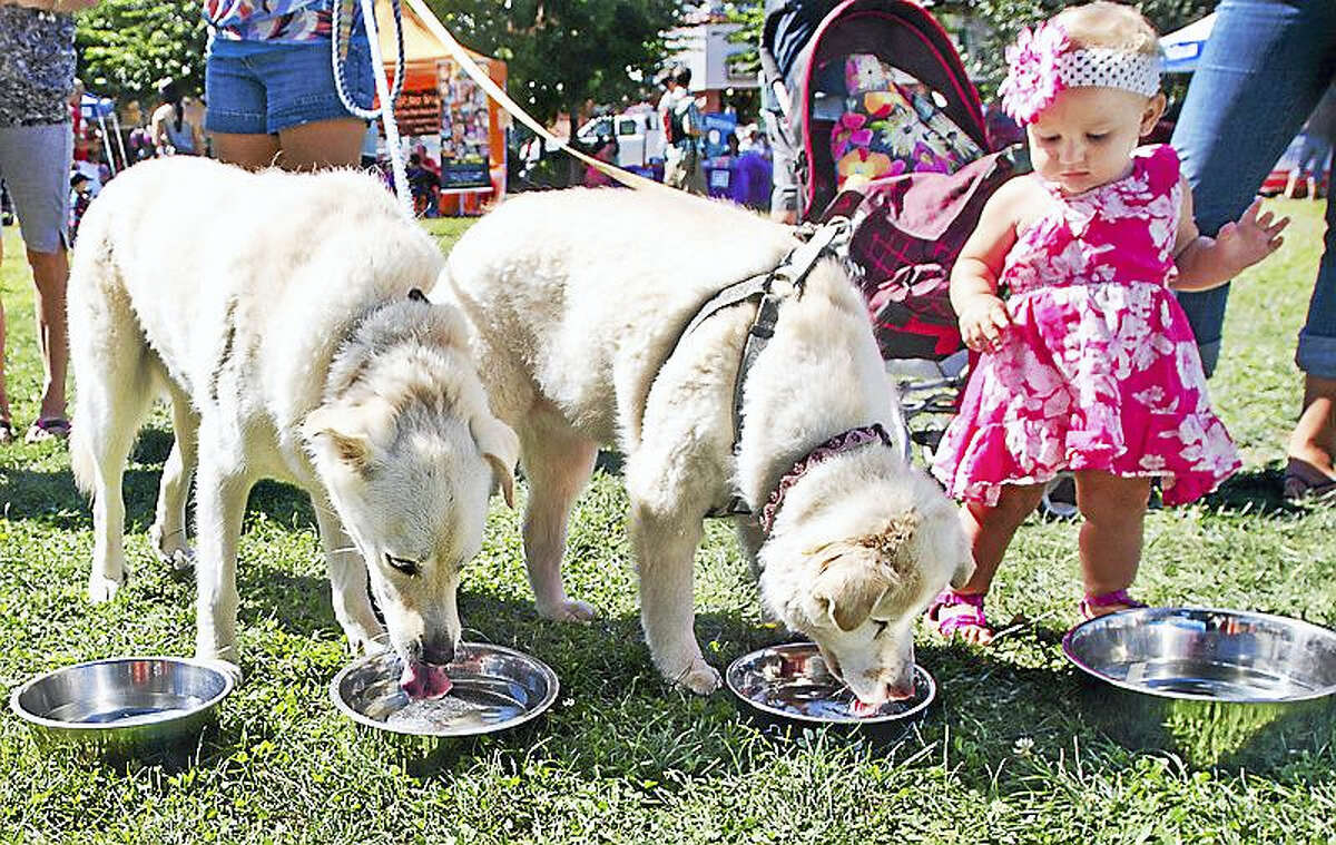 A cute (and thirst-quenching) moment from last year's Woofstock.