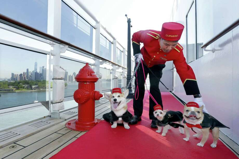Kennel Master Oliver Cruz tends to celebrity dogs, from left, Wally, Ella and Chloe outside the kennel aboard the ocean liner Queen Mary 2, docked at her homeport at the Brooklyn Cruise Terminal in New York. The Cunard ship underwent $132-million of renovations that includes, for its four-legged passengers, additional kennels, more play space and an owner's lounge. Photo: Richard Drew — The Associated Press   / Copyright 2016 The Associated Press. All rights reserved. This material may not be published, broadcast, rewritten or redistribu