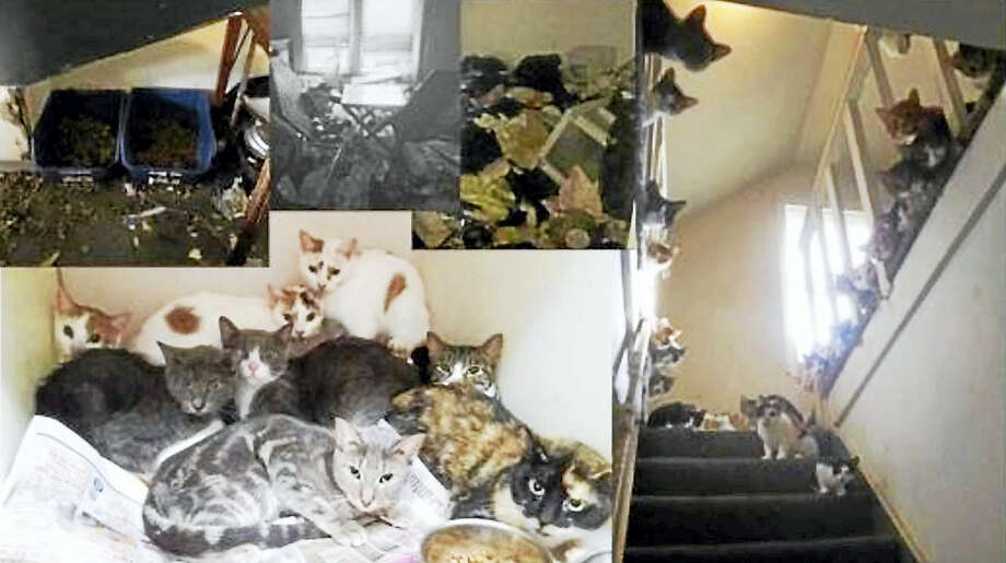 16 cats were rescued and 2 were found dead in a home at 13 Auger St. Photo: Contributed Photo - Halfway Home