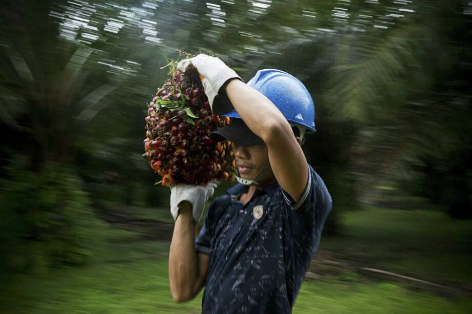 An employee carries a bunch of oil palm fruit at the Mong Reththy Investment Cambodia Oil Palm Co. plantation in the Preah Sihanouk province, Cambodia. Photo: Brent Lewin — Bloomberg   / Bloomberg