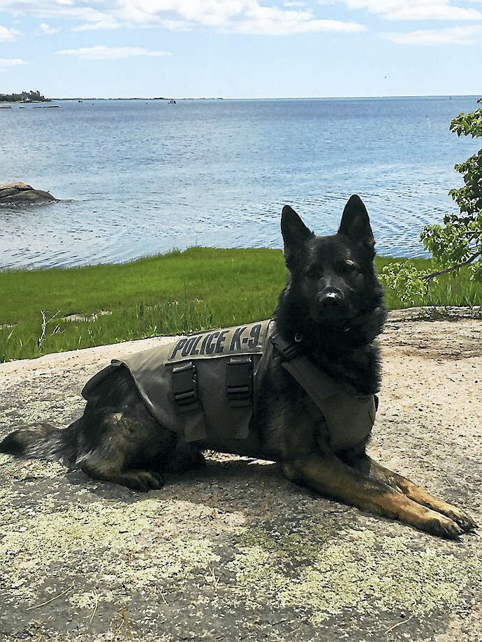 West Haven K9 Cody has received the gift of a protective vest from a Massachusetts-based charity organization. Contributed photo Photo: Journal Register Co.