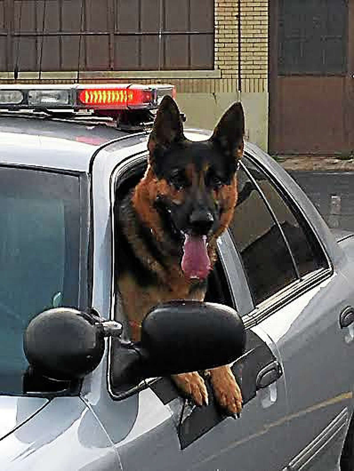Most troopers won't be taking along K-9 colleagues like Arek, pictured here.