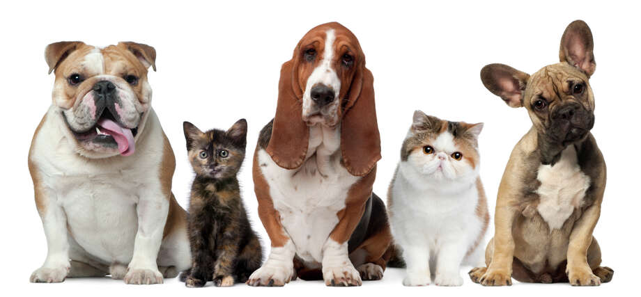 Who, us? A new UCLA study points to pet dogs and cats as significant contributors to global warming.