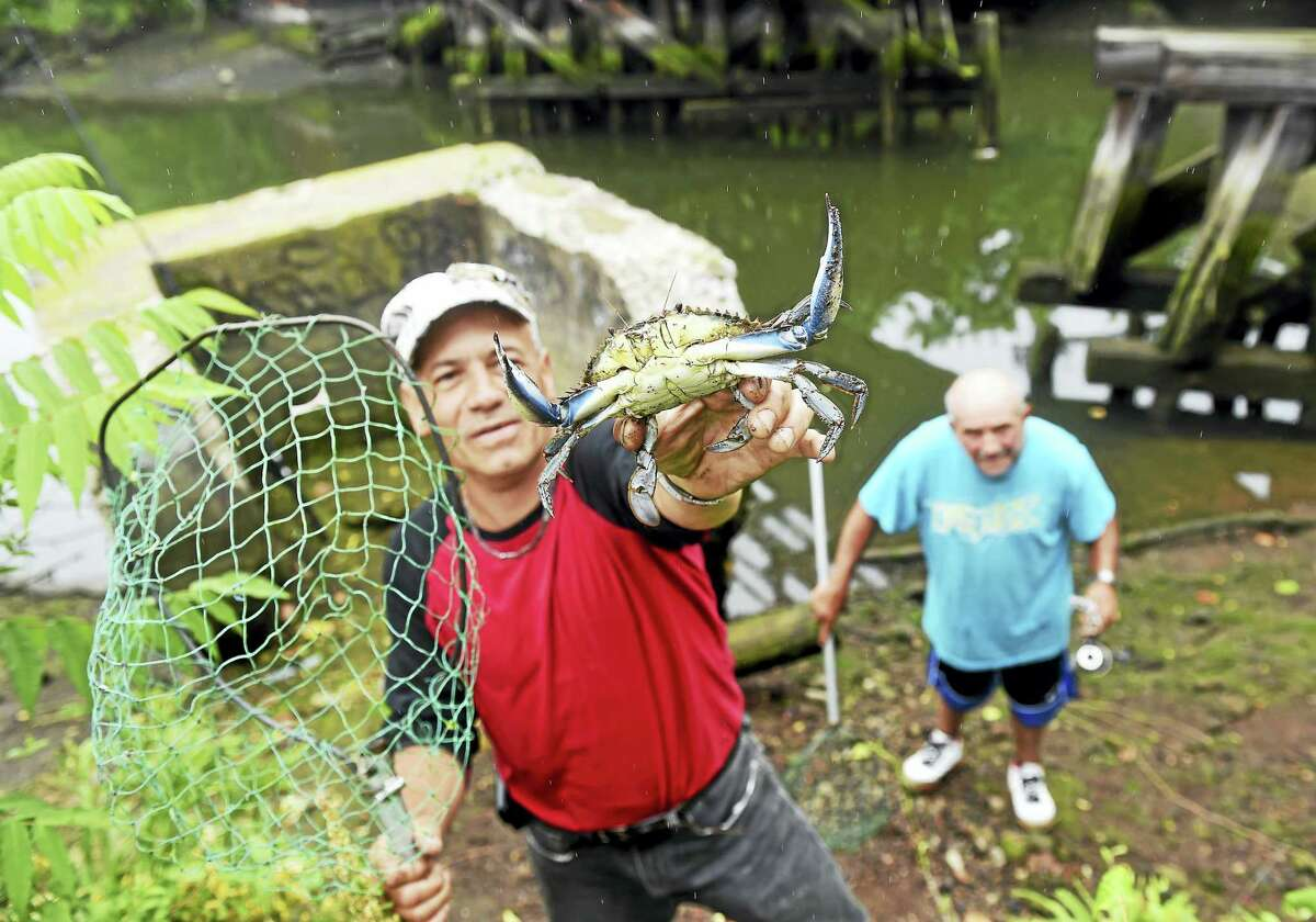 Hector Diaz shows off a blue crab he caught Tuesday in the Mill River in New Haven near where the Mill River Trail is slated for improvements. In the background is Antonio Alvarado.