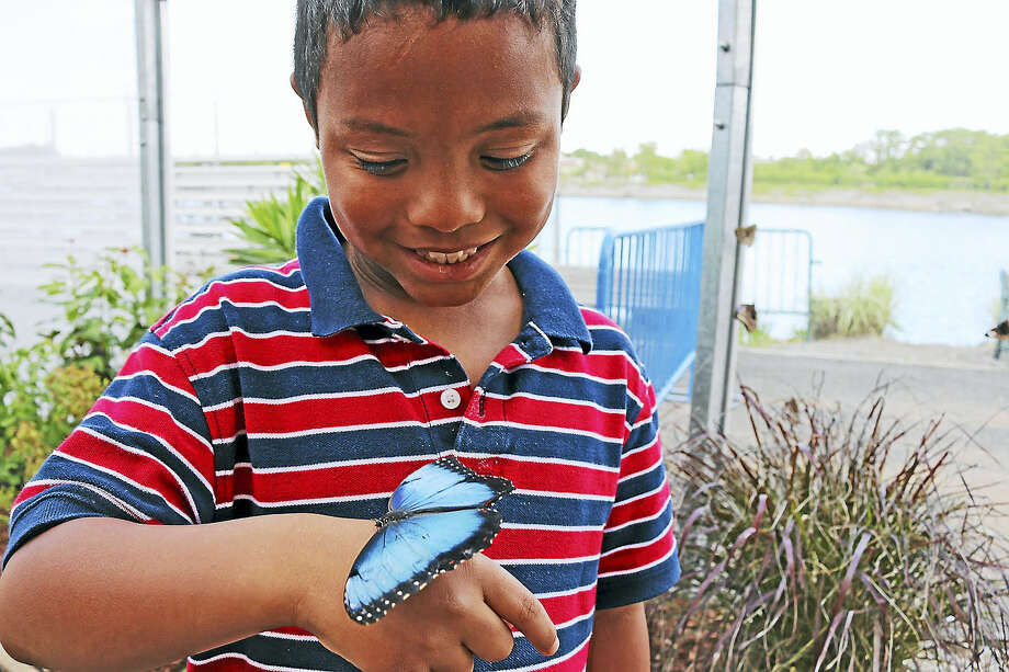 The Flutter Zone offers up-close looks at butterflies. Photo: Contributed Photo
