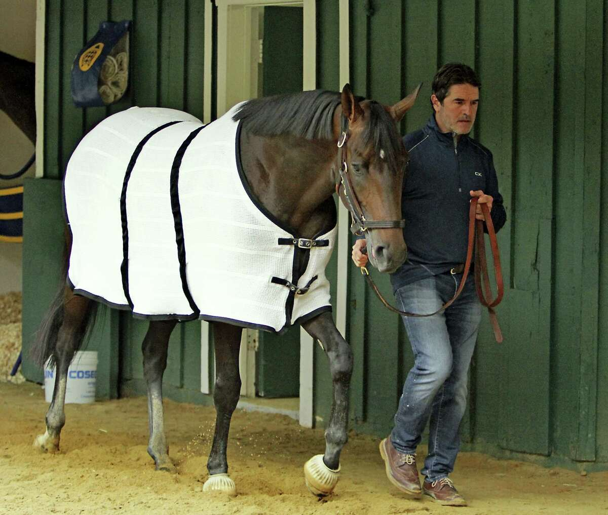 Trainer Keith Desormeaux walks Preakness Stakes hopeful Exaggerator in the stakes barn at Pimlico Race Course Wednesday in Baltimore following a morning jog.