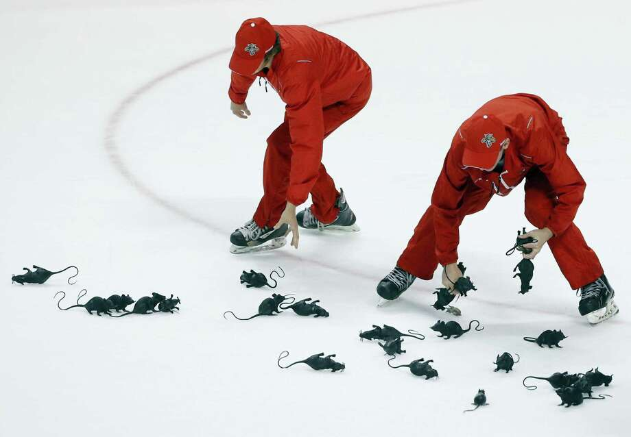 Crews round up rats thrown on the ice by Panthers fans after Florida beat the Islanders in game 2 of their playoff series. Photo: The Associated Press File Photo   / AP