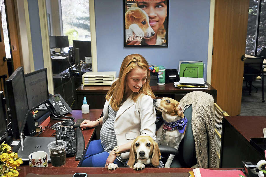 Executive Assistant Sarah Redding shares her desk area with her dogs Ruby and Finn at the Humane Society of the United States in Gaithersburg, Maryland, on April 13, 2016. Redding thinks that having dogs in the workplace creates a friendlier environment. Photo: Photo By Bonnie Jo Mount — The Washington Post / The Washington Post
