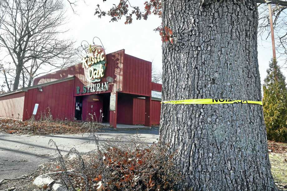 An oak tree on the property of the former Rustic Oak Restaurant on Washington Avenue in North Haven. Photo: (Arnold Gold-New Haven Register)