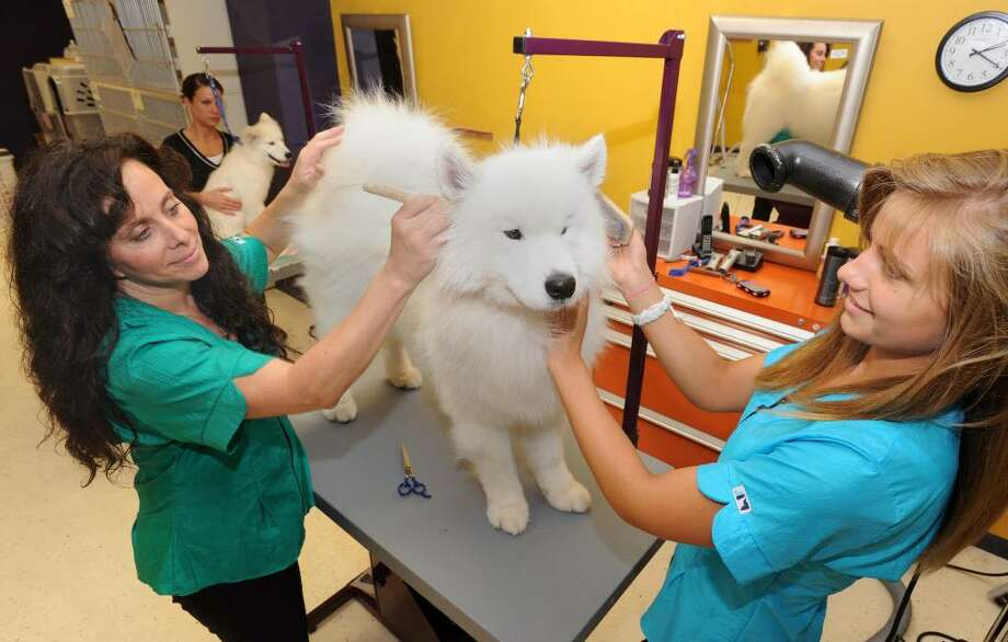 Carrie Collier, left, owner of Magic Touch Professional Cat and Dog Grooming in Brookfield, and her daughter, Dana Pawasarat, 17, work on an Italian Spinoni named Bunny. Photo taken Friday, June 11, 2010. Photo: Carol Kaliff / The News-Times