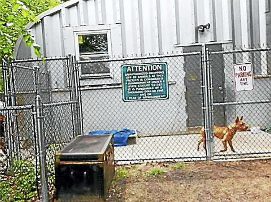 The Board of Selectmen unanimously voted Tuesday to regionalize its animal shelter with Woodbridge. Photo: Contributed Photo — Seymour Animal Shelter