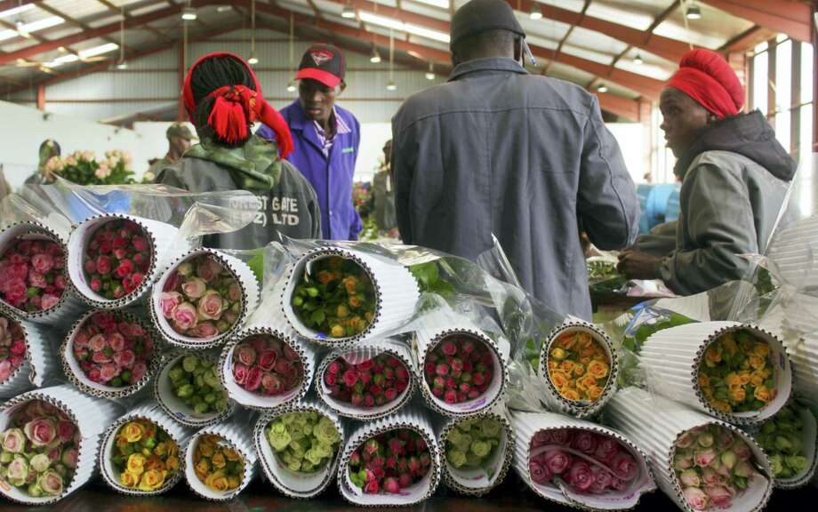 Workers pack roses for Valentine's Day, at the AAA Growers' farm in Nyahururu, four hours' drive north of the capital Nairobi, in Kenya. This Valentine's Day, there's a good chance your flowers came from Kenya as the cool climate and high altitude make it perfect for growing large, long-lasting roses - propelling it to become the fourth-largest supplier after the Netherlands, Ecuador and Colombia. (AP Photo/Ilya Gridneff) Photo: AP / AP