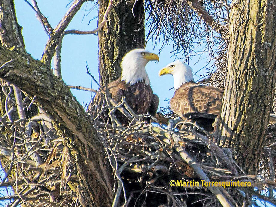 Eagle Watching on the West River Photo: Journal Register Co.