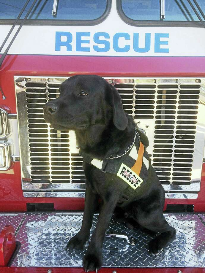 CONTRIBUTED PHOTOStorm Ambulance Corps' newest addition, Poncho. Photo: Journal Register Co.