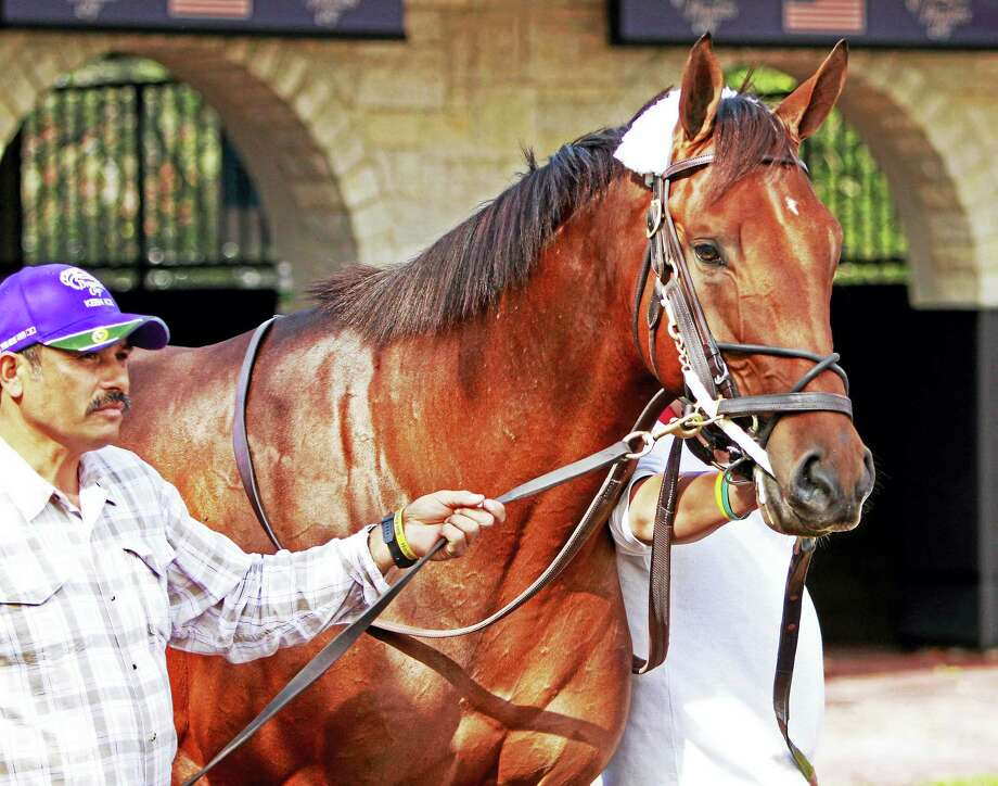 Keen Ice is seen here at Keeneland race track in October. Photo: The Associated Press File Photo   / FR50389 AP