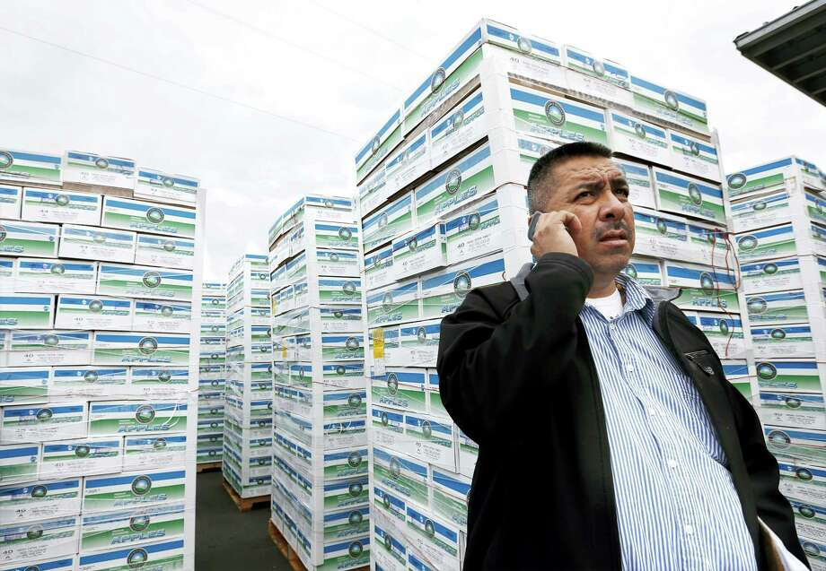 In this Nov. 5, 2014, file photo, Saul Ruiz talks on the phone at the Apple King warehouse in Gleed, Wash. Photo: Yakima Herald-Republic Via AP   / YAKIMA HERALD-REPUBLIC