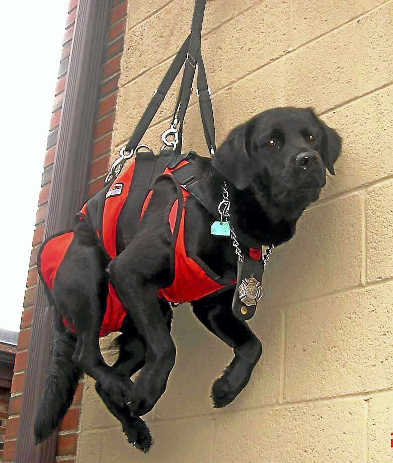 Contributed photo     Storm Ambulance Corps' search and rescue dog, Kevin, has died. Photo: Journal Register Co.