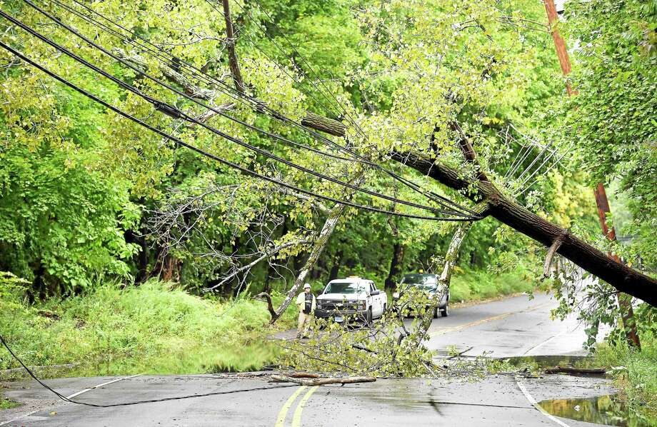 A large tree fell across power lines and closed Wilmot Road in New Haven Wednesday. Photo: Arnold Gold — New Haven Register