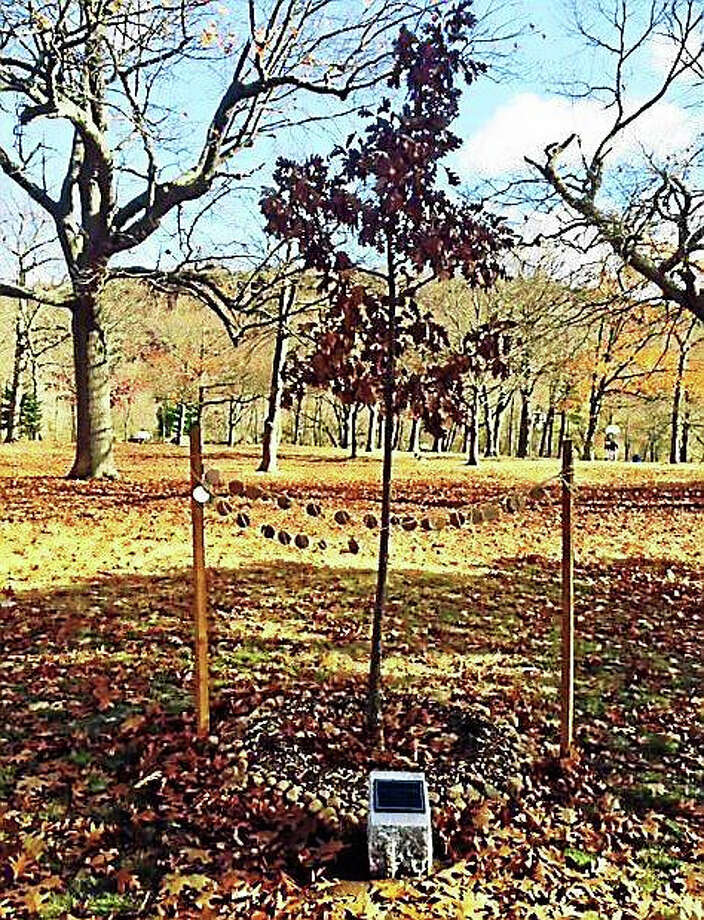 This monument and white oak tree were recently placed in East Rock Park in memory of James Velvet. Photo: Jennifer Kaylin