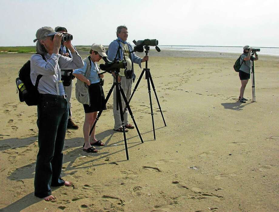 Birders on the beach. Photo: Contributed Photo