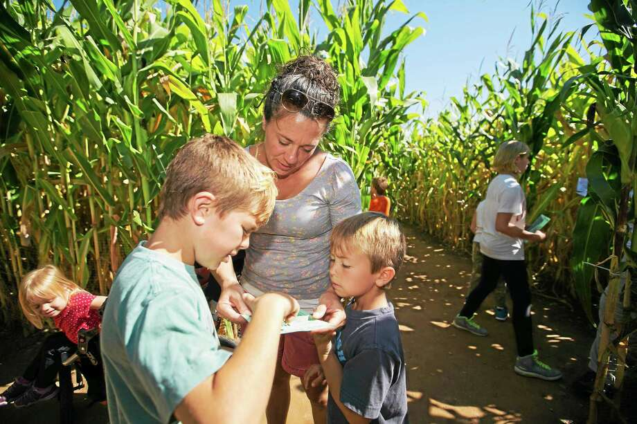Contributed  A family looks to navigate the maze at Lyman Orchards. Photo: Journal Register Co.