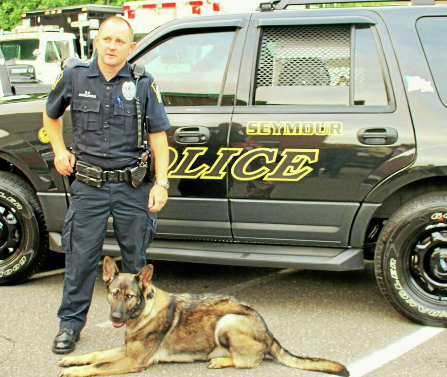 Sage, a Seymour police dog, now has a bullet-proof vest Photo: Contributed Photo
