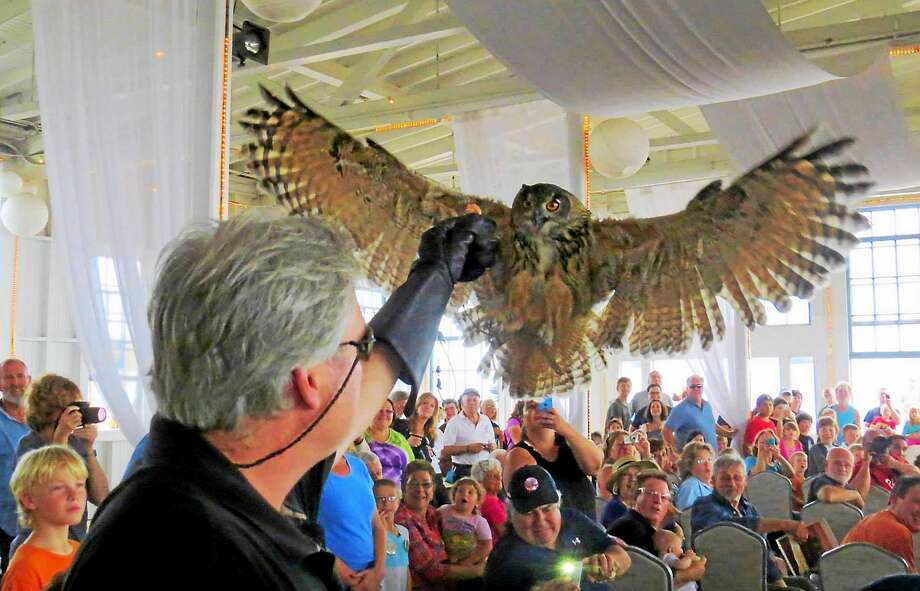 Skyhunters in Flight will be at the Migration Festival on Sunday with its spectacular eagle owl and other free-flying birds of prey. Photo: Audubon Connecticut