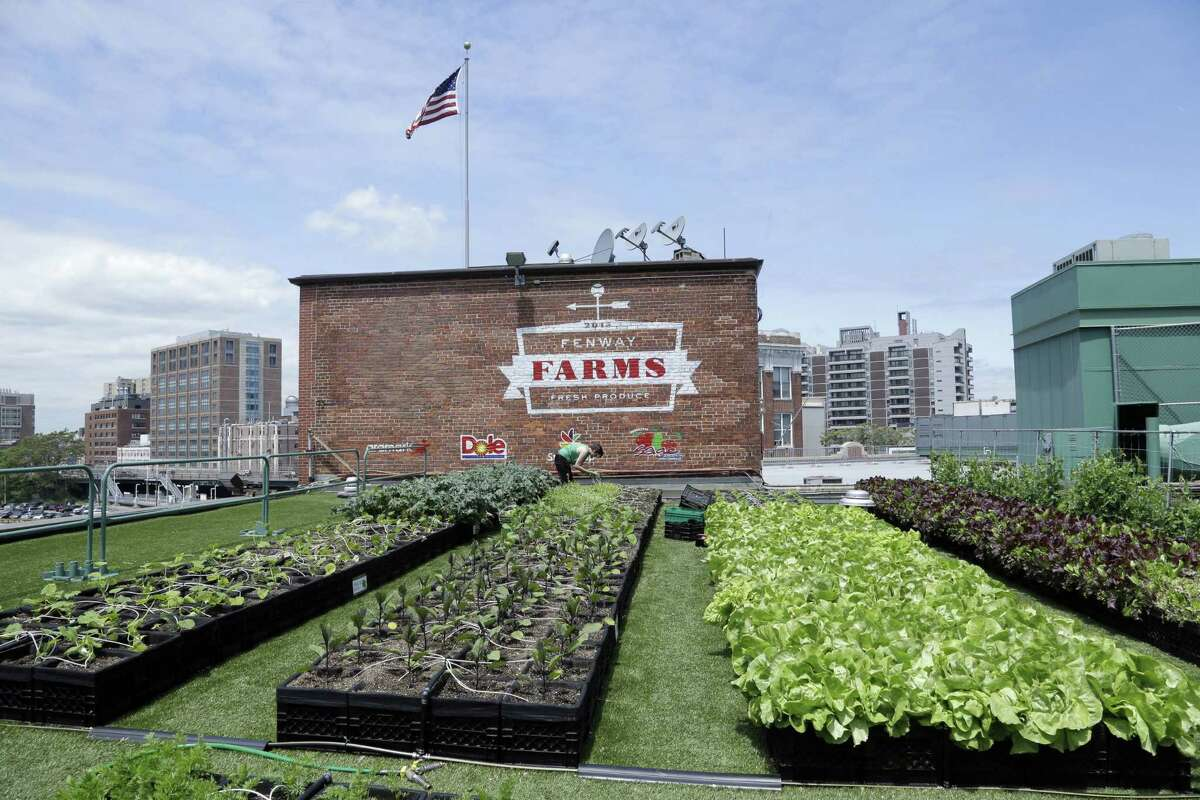 In this photo taken June 4, a produce garden grows on a rooftop on the third-base side of Fenway Park in Boston.
