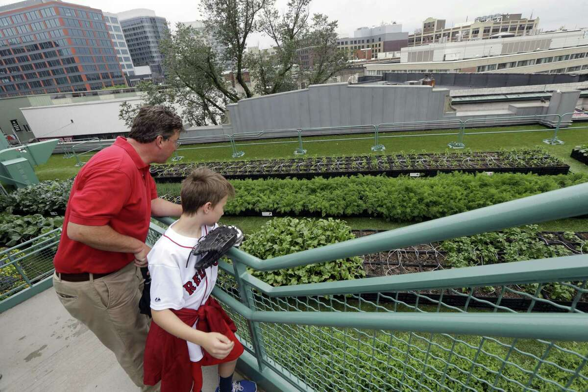 The Associated Press In this photo taken June 16, fans Michael Moore and his son, Henry, pause to look at a rooftop garden on the third-base side of Fenway Park.