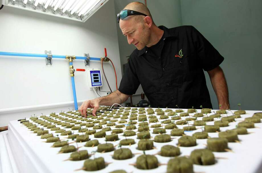 Consultant Jonathan Hunt checks seedlings growing in the new marijuana growing facility on the Flandreau Santee Sioux Reservation in Flandreau, S.D. Photo: Jay Pickthorn — The Associated Press   / FR156812 AP