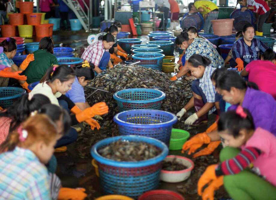 In this Sept. 3, 2015 photo, female workers wearing a yellow-white cosmetic paste known as thanka on their cheeks, sort shrimp at a seafood market in Mahachai, Thailand. Shrimp is the most-loved seafood in the U.S., with Americans downing 1.3 billion pounds every year, or about 4 pounds per person. Photo: AP Photo/Gemunu Amarasinghe   / AP