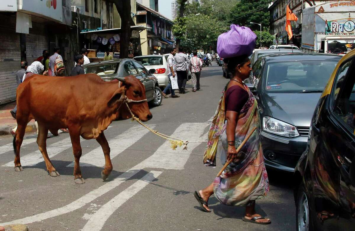 In this Friday, Oct. 9, 2015 photo, a woman leads her cow across a road collecting alms from devout Hindus in Mumbai, India. Cows have long been sacred to Hindus, worshipped as a mother figure and associated since ancient times with the god Krishna. But increasingly, cows are also becoming a tool of political parties, an electioneering code word and a rallying cry for both Hindu nationalists and their opponents.